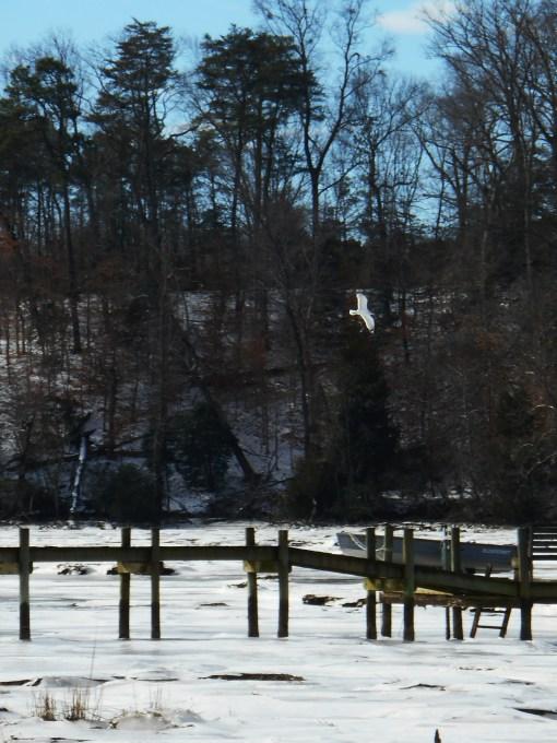 January 26 2014 ice 060