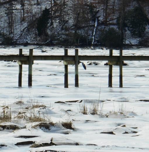 January 26 2014 ice 062