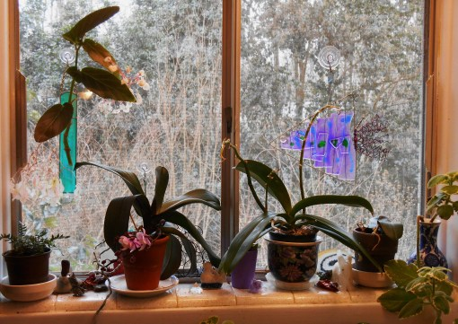 This west facing window is my best window for bringing orchids back into bloom.
