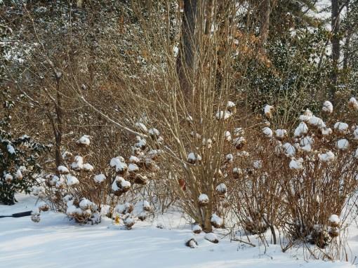 January 29 2014 snow 011