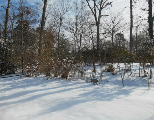 January 29 2014 snow 015
