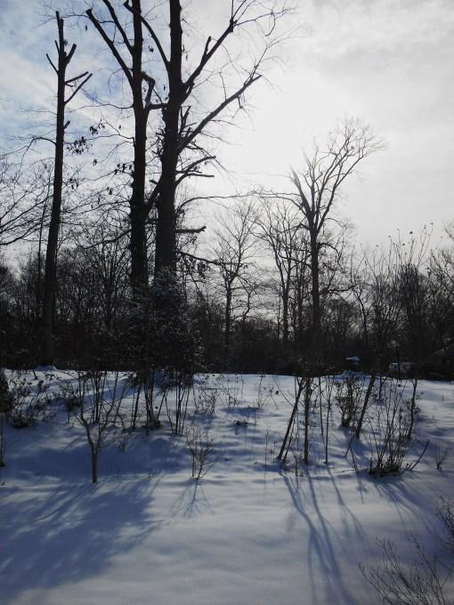 January 29 2014 snow 018