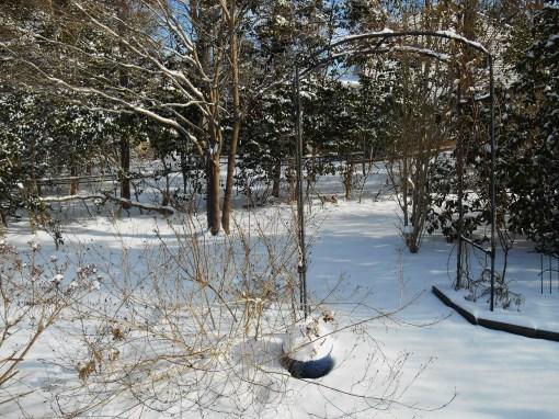 January 29 2014 snow 022
