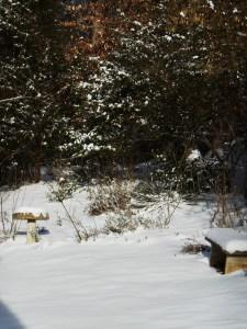 January 29 2014 snow 026