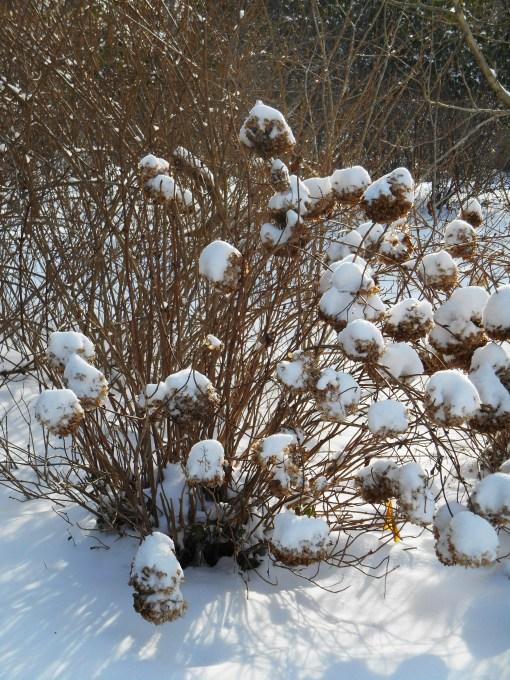 January 29 2014 snow 028
