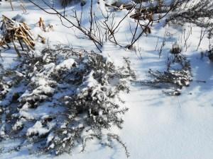 January 29 2014 snow 041