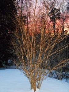 January 29 2014 sunset 004