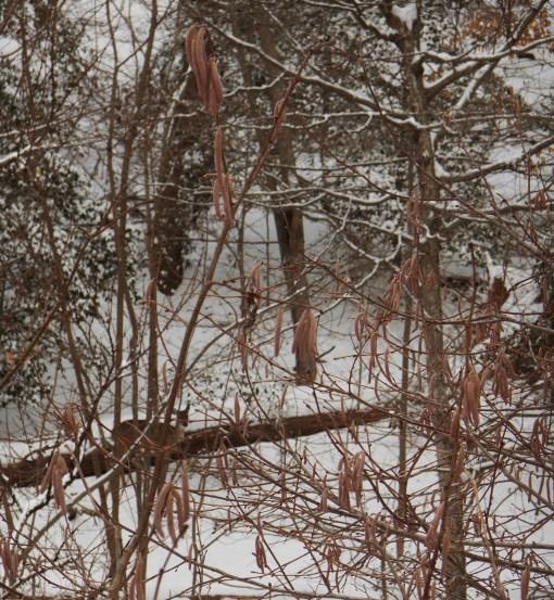 January 29 snow 013