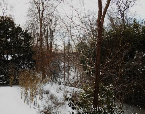 January 29 snow 018