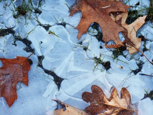 January 4 ice 008