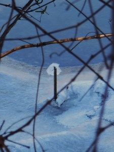 January 4 ice 021