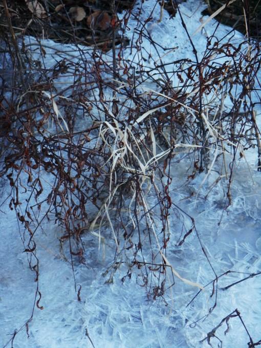 January 4 ice 027