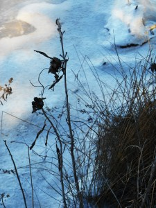 January 4 ice 045