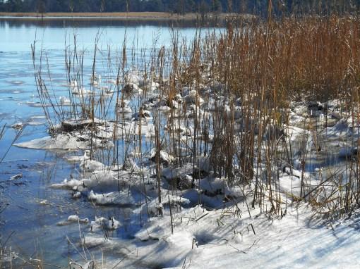 January 4 ice 069