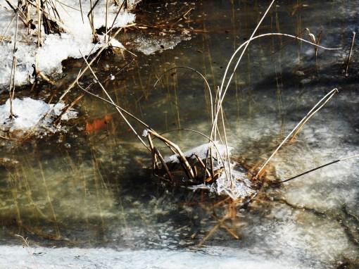 January 4 ice 072