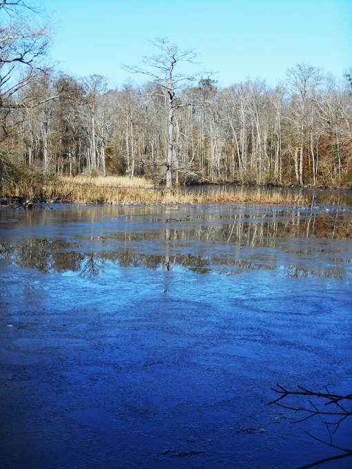 January 4 ice 080