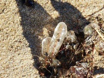 January 7 ice on beach 011