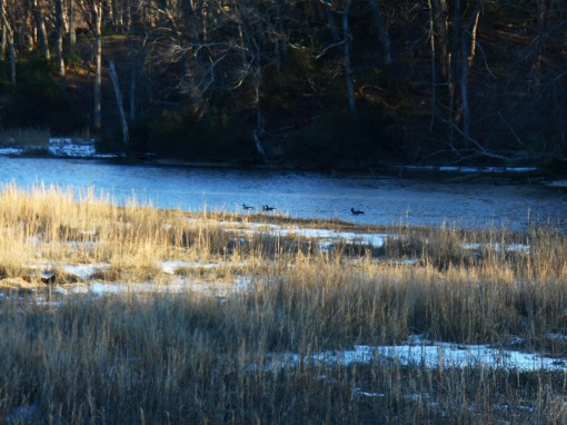 Ducks swim in the open channel of Halfway Creek Tuesday afternoon, as the temperatures hover around 20 degrees.