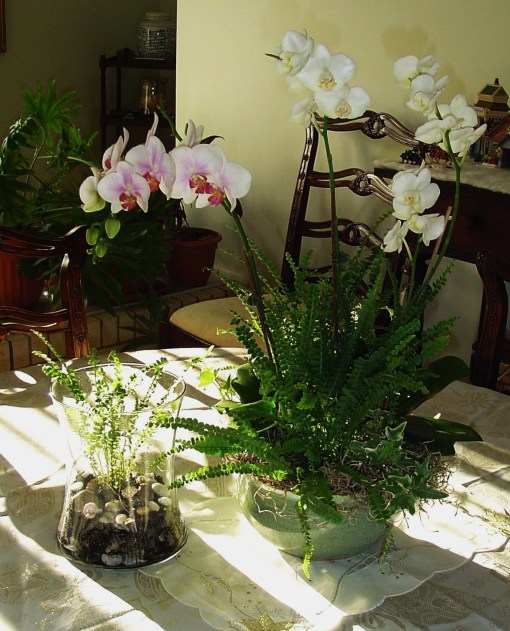 orchid arrangement 002
