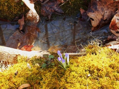 February 16 spring flowers 010