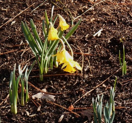 February 16 spring flowers 022