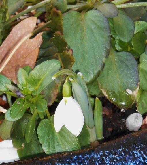 February 16 spring flowers 024