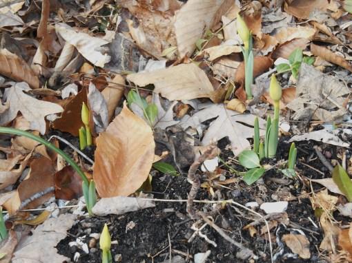 February 16 spring flowers 027