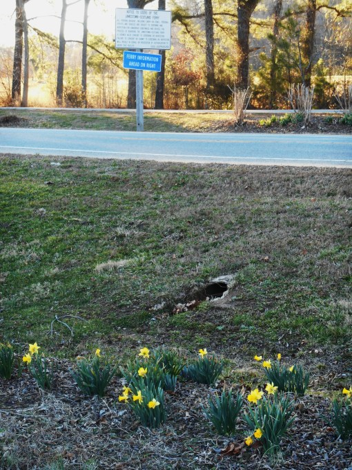 February 24, 2014 daffodils 009