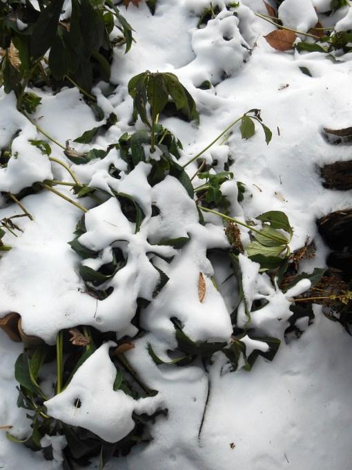 January 26 2014 ice 004