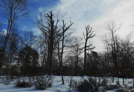 January 29 2014 snow 005