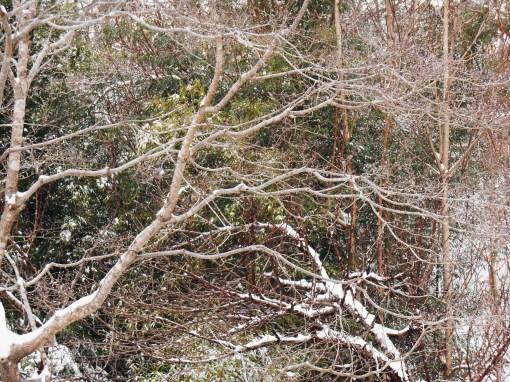 January 29 snow 001