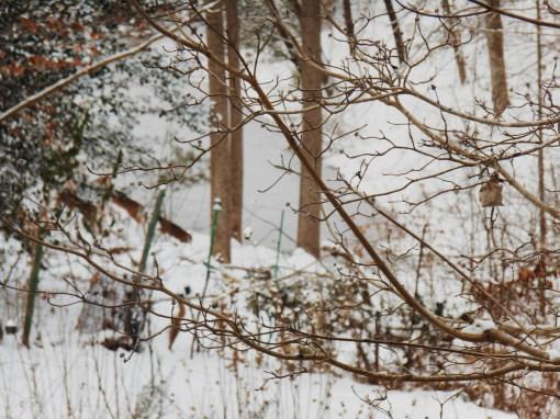 January 29 snow 025