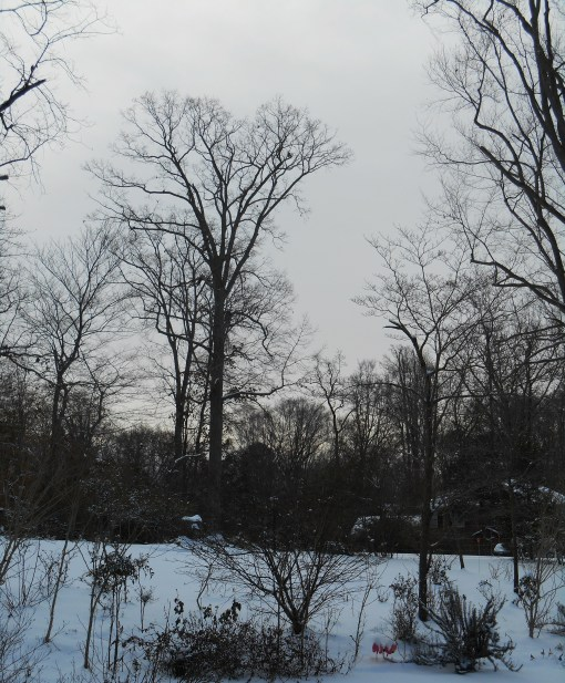 January 29 snow 030