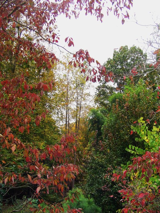November 1 fall color 033