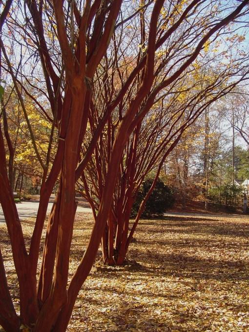 November 24 2013 trees 005