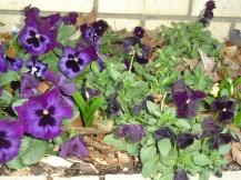 March 1 garden 011