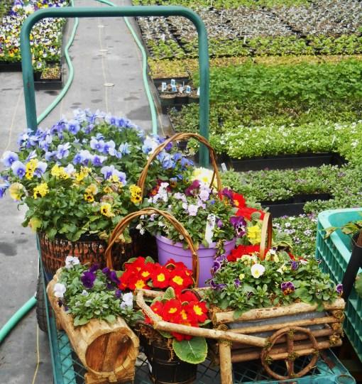 March 1 garden center 006