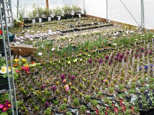 March 1 garden center 007