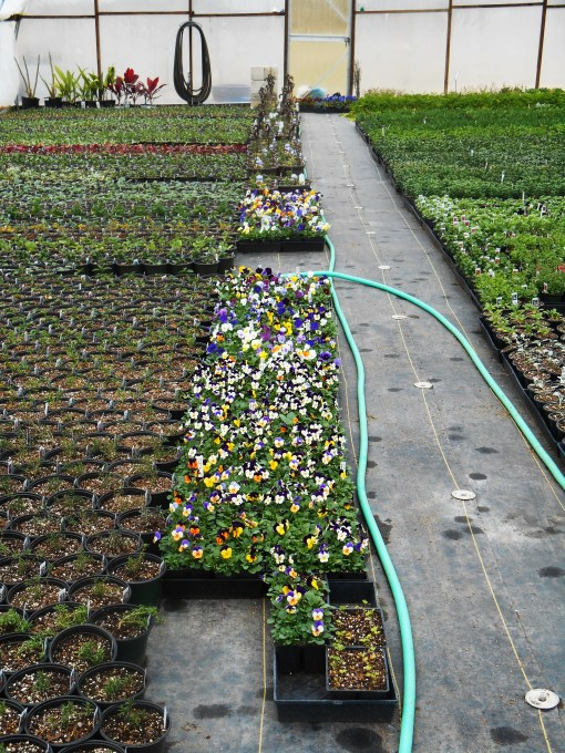 March 1 garden center 008