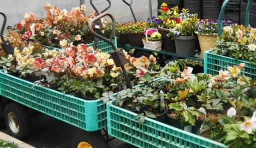 March 1 garden center 010
