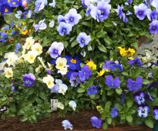 March 1 garden center 011