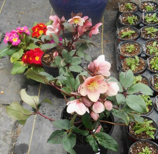 March 1 garden center 012