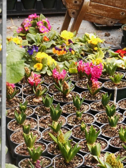 March 1 garden center 013