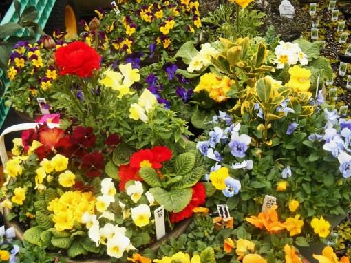 March 1 garden center 014