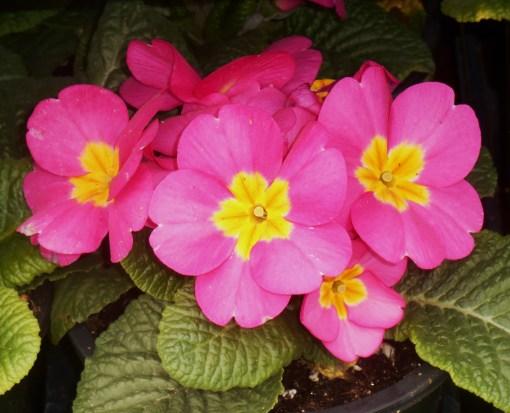 March 1 garden center 016