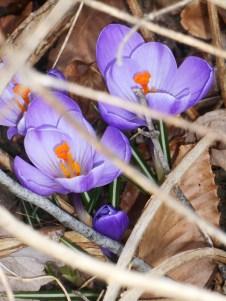 March 11, 2014 garden 007