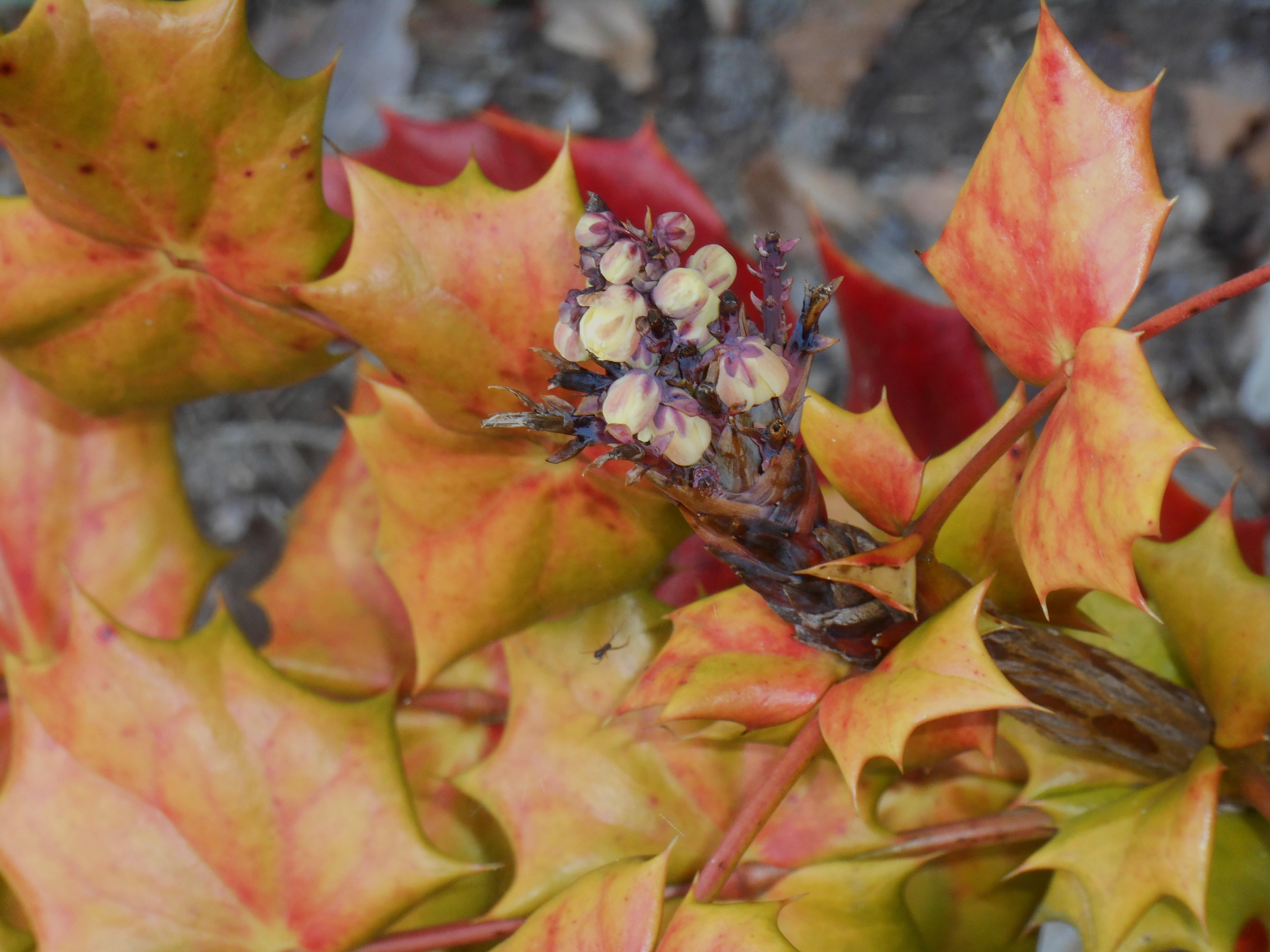 One word photo challenge: Red | Forest Garden