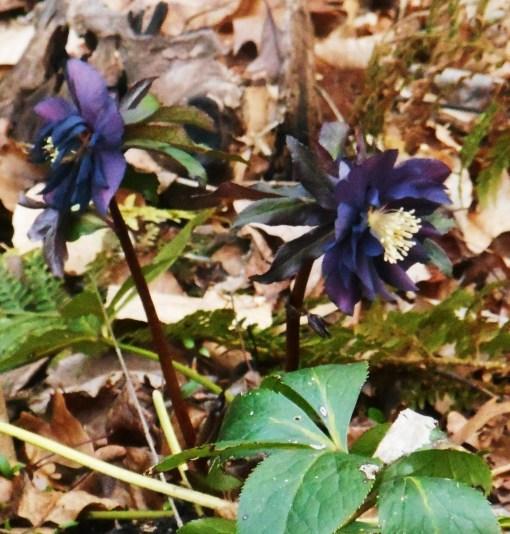 March 11, 2014 garden 017