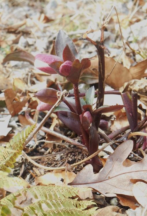 March 2 garden 006