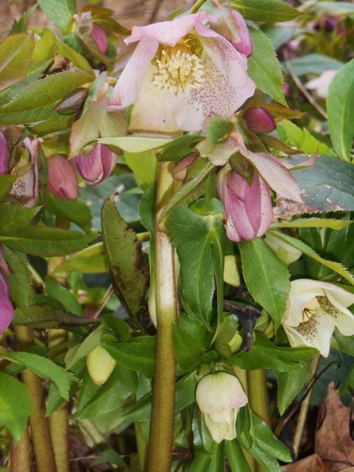 March 2 garden 007